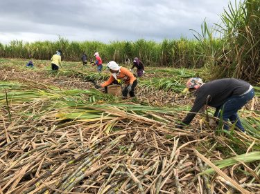 農民への人権侵害の救済を ILOに申し立て